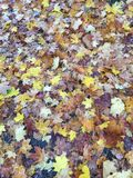 Autum leaves and i love autum royalty free stock photography