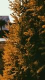 Autum sidor av växten, övre sikt för slut som är stor för mobil tapet royaltyfri foto