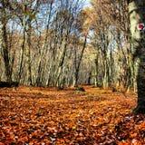 Autum spacer przez drewna Zdjęcia Stock
