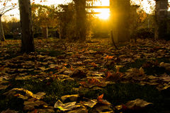 Autum Royalty Free Stock Photo