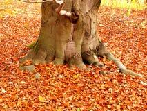 Autum tree detail Royalty Free Stock Image