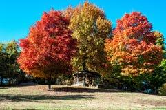 Autum Trees. Autumn trees with a gazebo Royalty Free Stock Photos