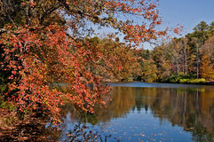 Autum through the trees on fishing pond. Autumn on bass fishing pond royalty free stock images