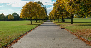 Autum trees lining the path Stock Image