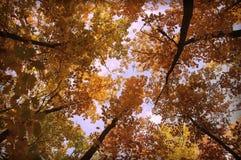 Autum trees Stock Photos