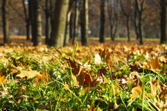 Autumal-Blätter auf Gras in der Parknahaufnahme Lizenzfreie Stockfotografie