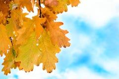 autuman дуб листьев стоковые фото