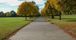 Autumbomen die de weg voeren Stock Afbeelding