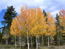 Autumbomen die kleuren draaien Stock Fotografie