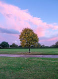 Autumboom in het park Stock Fotografie