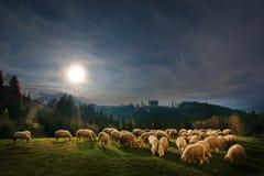 Autumlandschap in Zemelen, Transsylvanië, Brasov, Roemenië met schapen eatting gras op de heuvels Royalty-vrije Stock Afbeeldingen