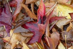 Autumm来临,叶子有秋天 库存图片