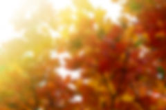 Autumm backgrounds with sunshine Stock Photography