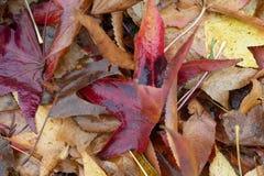 Autumm está viniendo, las hojas tiene caída imagen de archivo