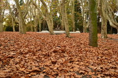 Autumm in the Prado, Montevideo Royalty Free Stock Photography