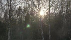 Autumm-Sonnenlicht durch bloße Bäume im Wald während des Bewegens in Auto auf Straße stock video footage