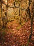 Autummn nedgång på skog Arkivfoton