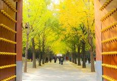 AutumnÂ风景 库存图片