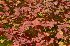 Autumnsceneria Obraz Royalty Free