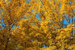 Autumnsceneria Fotografia Royalty Free