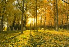 Autumnsceneria Obrazy Royalty Free