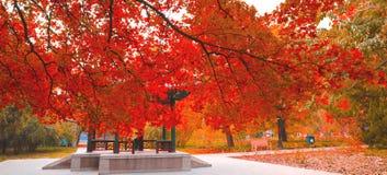 Autumnsceneria Zdjęcie Stock