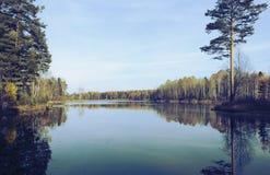 Autumn冷的湖在一个具球果森林里 免版税库存照片