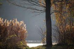 Autumn有森林的湖海岸线在背景中 免版税库存图片