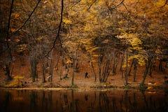 Autumn湖在森林里 免版税库存图片