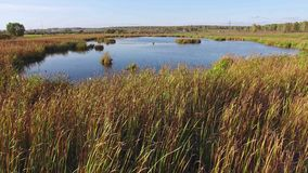 Autumn湖藤茎树,黄色草,风景 鸟瞰图 股票视频