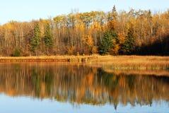 autumn łosia wyspy widok jeziora Fotografia Royalty Free