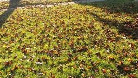 Autumn& x27 έδαφος του s Στοκ Φωτογραφία