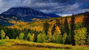 Autumn& x27; пальто s цветов стоковое фото rf
