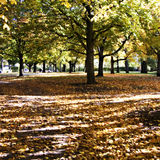 Autumn 01 Royalty Free Stock Photography