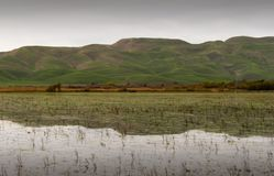 Autumn 02. Flooded paddocks in Autumn. Hawke's Bay, New Zealand Royalty Free Stock Image