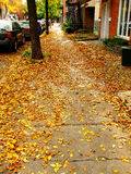 Autumn_03. Picture of fallen dead leaves in autumn on a Montreal street, Quebec Stock Photography