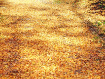 Autumn_05. Beautiful autumn mood Royalty Free Stock Image