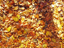 Autumn_06. Beautiful autumn mood Royalty Free Stock Photo