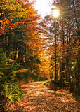 Autumn_07 Images stock