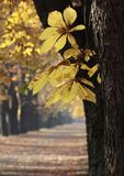 Autumn_1 Royalty Free Stock Images