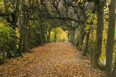 Autumn-1 Royalty Free Stock Photography