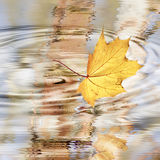 Autumn. Al mood with maple leaf and water Stock Photos