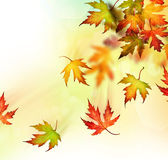 Autumn. Beautiful Colorful Autumn Leaves in motion royalty free stock images