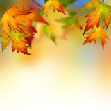 Autumn. Beautiful Autumn Leaves.Selective focus royalty free stock photos