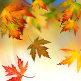 Autumn. Beautiful Colorful Autumn Leaves in motion royalty free stock photography