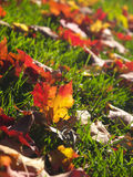 Autumn. Leaves on the ground royalty free stock photography
