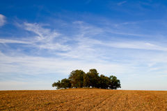 Autumn. Field with lonely trees Stock Photos
