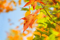 Autumn Stock Images
