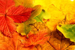 Autumn. A trees and fall ,autumn royalty free stock photography