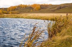Autumn. Lake with canes. Autumn. Cloudy weather stock images